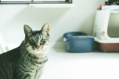 【画像】ペット保険 トラブル