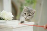 猫や犬を飼うなら入っておきたい「ペット保険」の役割とは