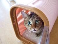 ペット保険にまつわるトラブル