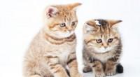 ペット保険の請求方法「後日精算」と「窓口精算」について