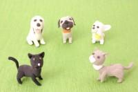 ペット保険からみる犬種・猫種とは