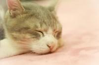 ペットがかかりやすい病気とペット保険の役立ち例