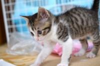 ペット保険「加入時の年齢は0歳が過半数」 ペット保険に関する調査結果を発表